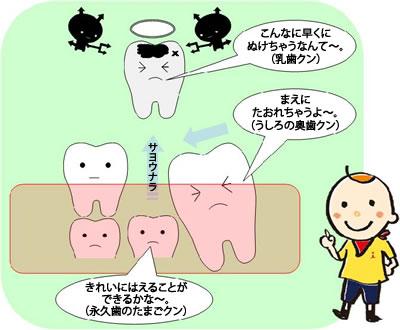 乳歯役割2